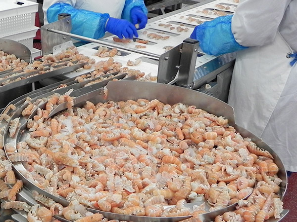workers processing langoustines
